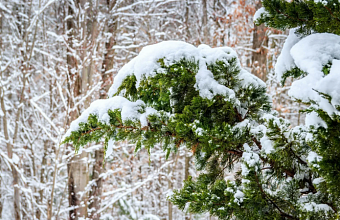 Мокрый снег и гололед прогнозируют на Кубани 21 января