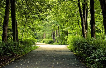 В Сочи 4 сквера получат статус особо охраняемых природных территорий