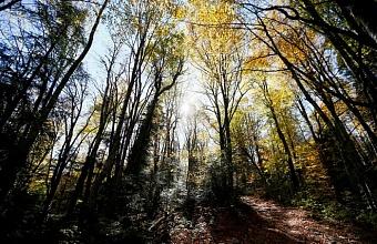 В Апшеронском районе уточнили границы природного заказника «Камышанова Поляна»