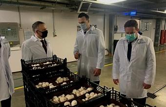 Бельгия планирует развивать бизнес в Краснодарском крае