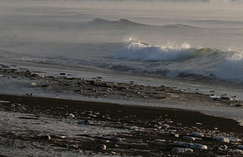 Эксперты рассказывают о причинах массовой гибели птиц в акватории Черного моря