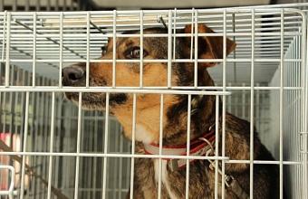 Более 1000 бездомных животных отловят и стерилизуют в Краснодаре до конца года