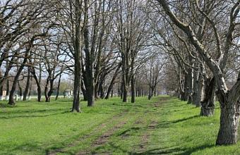 В Новороссийске планируют создать «Виноградарский парк» для туристов