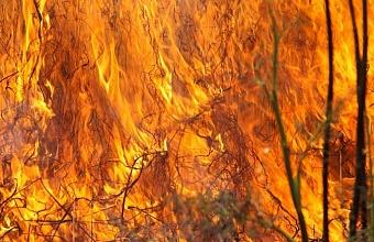 Под Геленджиком загорелась лесная подстилка, огонь распространился на 500 кв. метров