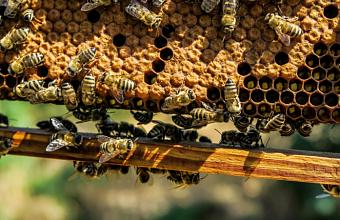 Полицейские Кубани нашли марихуану в пчелином улье