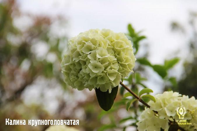 Источник фото: Пресс-служба Сочинского национального парка