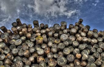 На Кубани выявили незаконный экспорт ценных пород древесины на сумму более 25 млн рублей