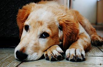 В Краснодарском крае домашних животных начнут прививать от COVID-19