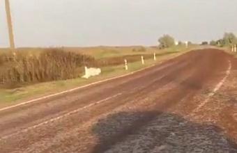 Жители Приморско-Ахтарского района поделились кадрами нашествия саранчи
