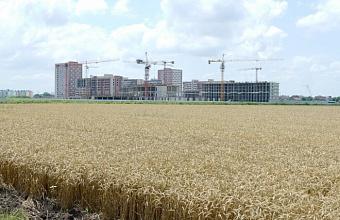 Как краснодарский АПК сможет не потерять былых показателей и сосуществовать со строительным рынком