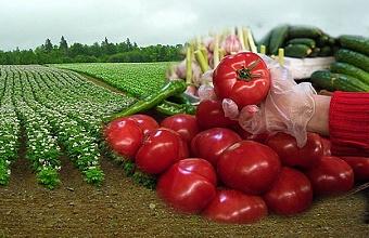 Аграриев волнует, что нового появилось на кубанских полях