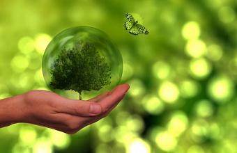 Российский бизнес в 2020 году увеличил расходы на экологию почти на 100 млрд рублей