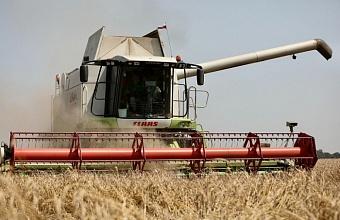 На Кубани в этом году собрали рекордные 12,4 млн тонн зерна