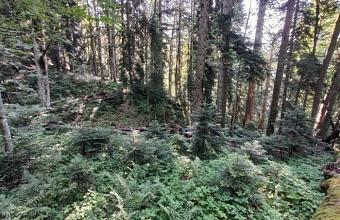 В Сочи 12-летний турист заблудился и провел ночь в лесу