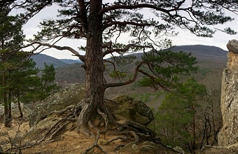 До конца года на Кубани  восстановят порядка 50 га леса