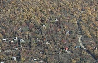 Во всех районах Кубани подготовят варианты создания лесопарковых поясов