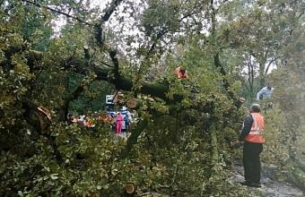 На трассе Джубга-Сочи перекрыли проезд из-за упавшего дерева