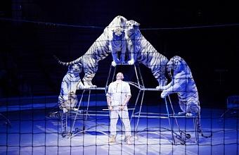 Шоу белых тигров «Шамбала» представили в Краснодаре