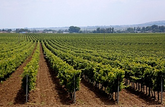 Lands Assigned to Grow Grapevines