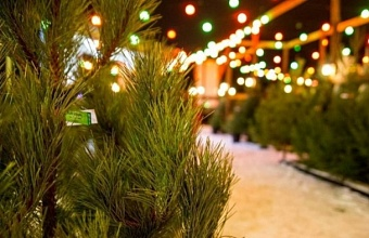 В Краснодаре выбрали более 80 мест для елочных базаров