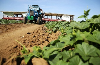 Subsidies to Kuban Farmers
